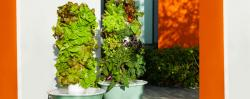 Tower Garden is a Growing Sensation